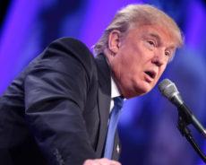 Trump Loves Lies, His Favorite: You're The Liar